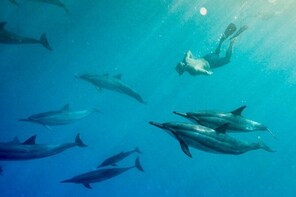 Kona Private Charter Ocean Adventure