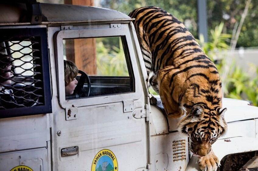 Tiger Trek - Taronga Zoo