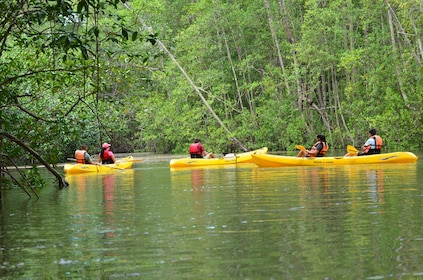 Damas Island Kayaking Tour