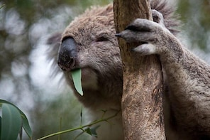 Phillip Island Koala Conservation Centre: Entry ticket