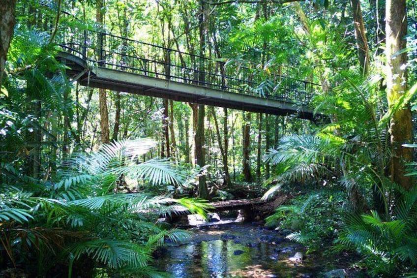 Daintree Rainforest at Mossman Gorge