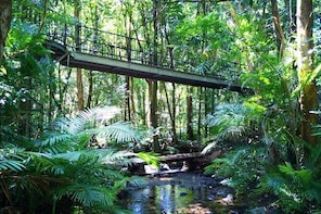 Cape Tribulation, Mossman Gorge, and Daintree Rainforest Day Trip from Cair...