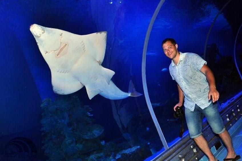 Show item 2 of 16. Skip the Line: Hurghada Grand Aquarium Entrance Ticket