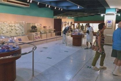 Phuket Seashell Museum Entrance Tickets