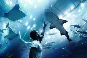 Dubai Aquarium and Underwater Zoo in Dubai Mall