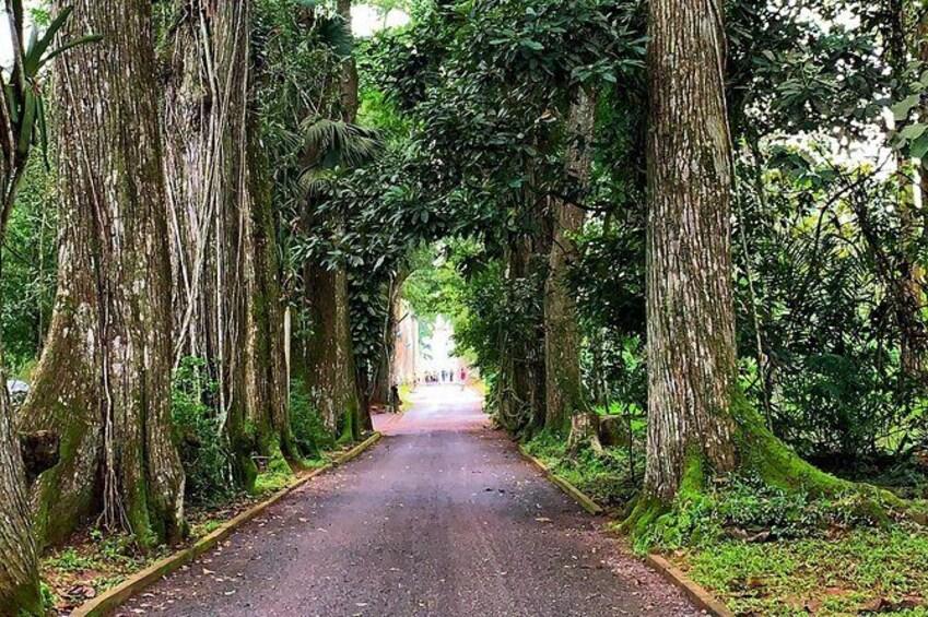 Show item 4 of 17. One Day Cocoa Farm Experience, Boti Waterfall,aburi Botanical Gardens