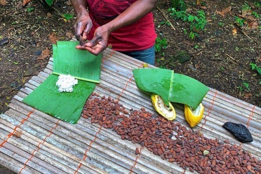 Show item 1 of 17. One Day Cocoa Farm Experience, Boti Waterfall,aburi Botanical Gardens