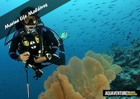 Full day diving, for certified divers - Including Equipment