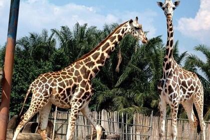 A'Famosa Safari Wonderland in Melaka Admission Ticket