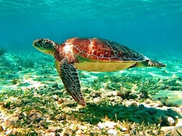 Tulum Ruins + Swith Turtles