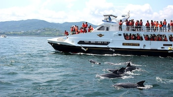 Kumamoto Amakusa Dolphin Watching (Bus Ticket Included)