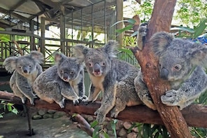 Skip the Line: Kuranda Rainforestation Nature Park Ticket