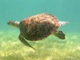 Tulum Ruins + Cenote + Swim with Turtles