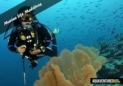 Half day diving, for certified divers - Including Equipment