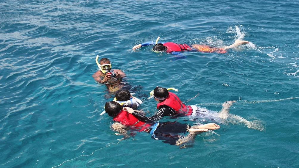 Show item 2 of 4. Dolphin Watching and Snorkeling Cruise in Guam