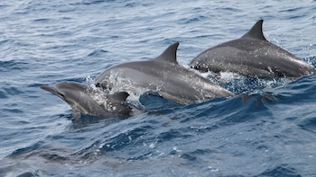 Dolphin Watching and Snorkeling Cruise in Guam