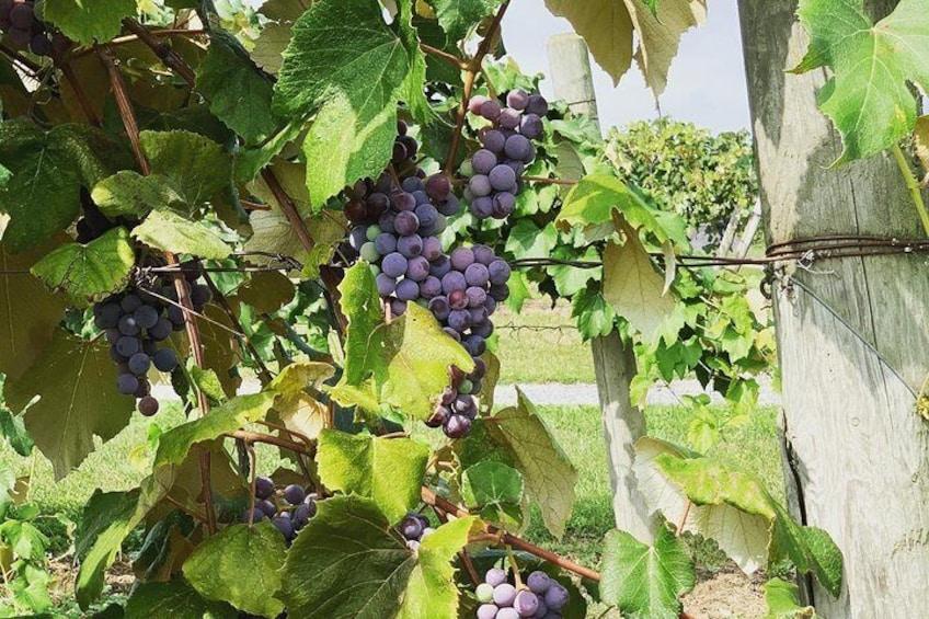 Show item 5 of 8. Seneca Lake Wine Tasting & Tour