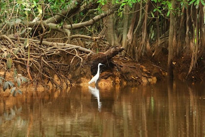 Khao Lak: Sri Phang Nga Canoe and Tam Nang Waterfall Tour