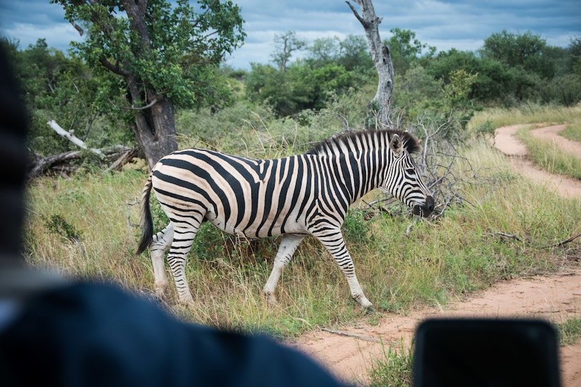 Show item 10 of 10. 4 Day Luxury Kruger National Park Safari