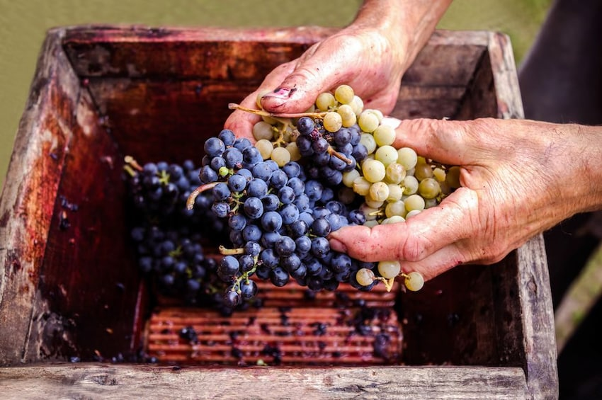 Show item 1 of 5. Valpolicella Wine Experience