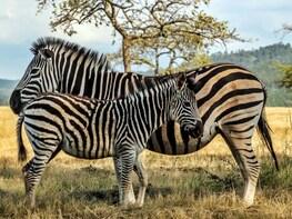 3-Day Kruger Classic Safari