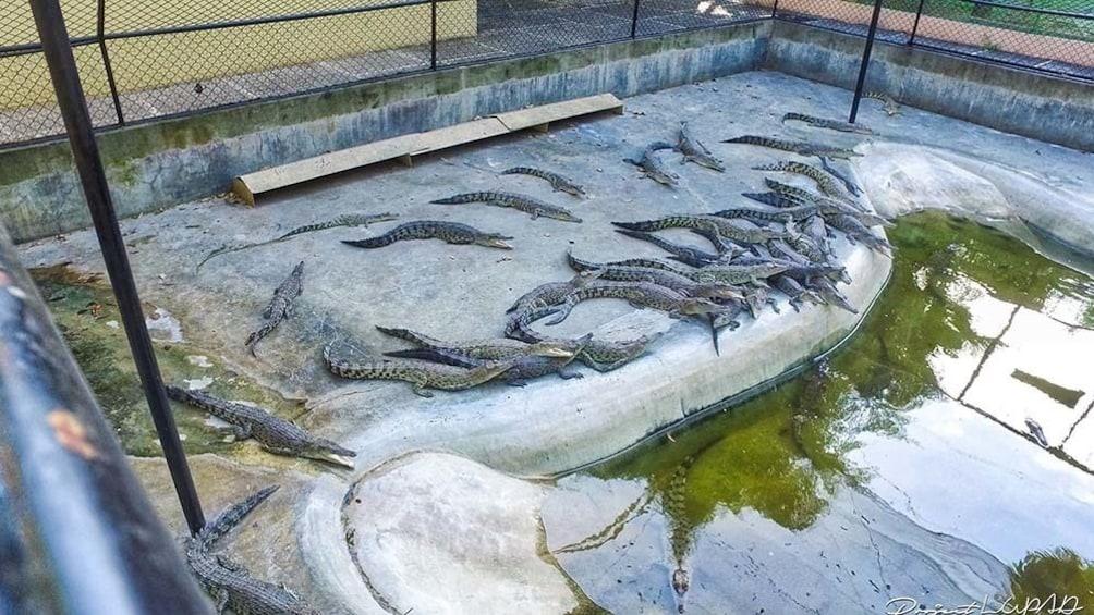 Show item 1 of 4. Davao Crocodile Park Tour [Half Day]