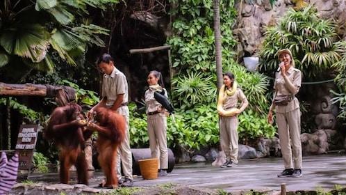 Bali Safari - Animals Show.jpg