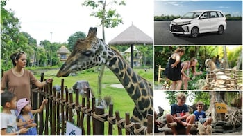 Private Shuttle: Bali Safari and Marine Park (Round-Trip)