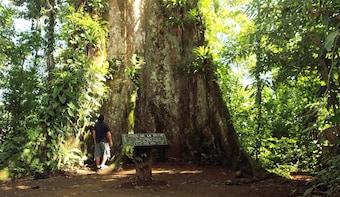 Rio Celeste & Tenorio Volcano National Park Hike