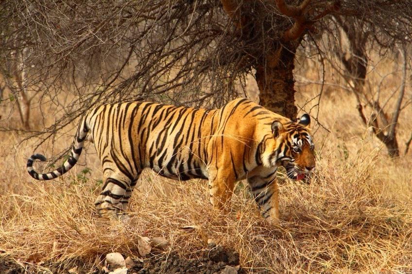 Tadoba National Park Tour From Nagpur