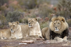 Aquila Game Reserve Full Day Safari with Private Transfers