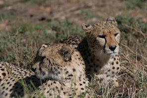 Half Day Aquila Game Reserve Safari with Private Transfers