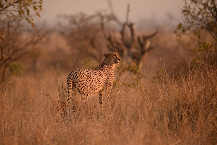Show item 2 of 6. Kruger National Park. 3 Days Best Ever Safari from Cape Town