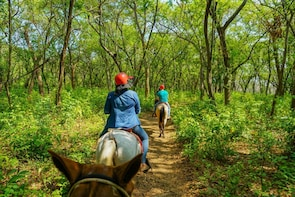 Forest & Beach Horseback Riding at Panama Beach