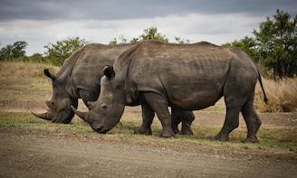 Big 5 Safari Shared Tour to Aquila Game Reserve