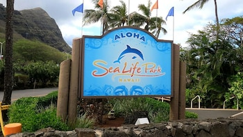 Experience Sea Life Park Hawaii