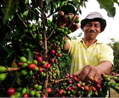 Full-Day Jardin Coffee Tour