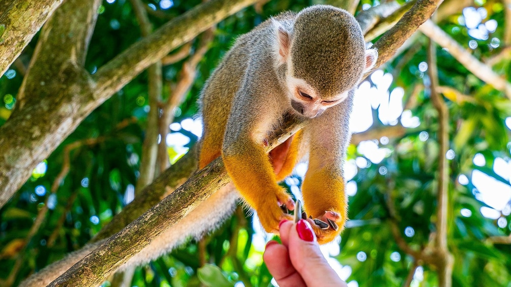 Full-Day Extreme Ziplines & Monkeyland from Juan Dolio