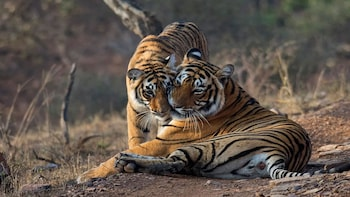 Ranthambore Day Safari From Agra By Jeep