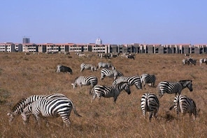 Nairobi park morning game drive/Baby Elephants/Giraffe Centre/Lunch at Carn...