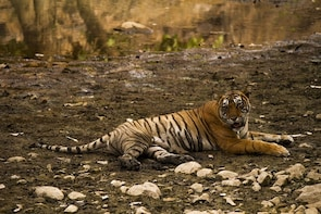 Ranthambore Day Safari By Canter