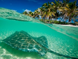 Full-Day Isla Contoy & Isla Mujeres Tour