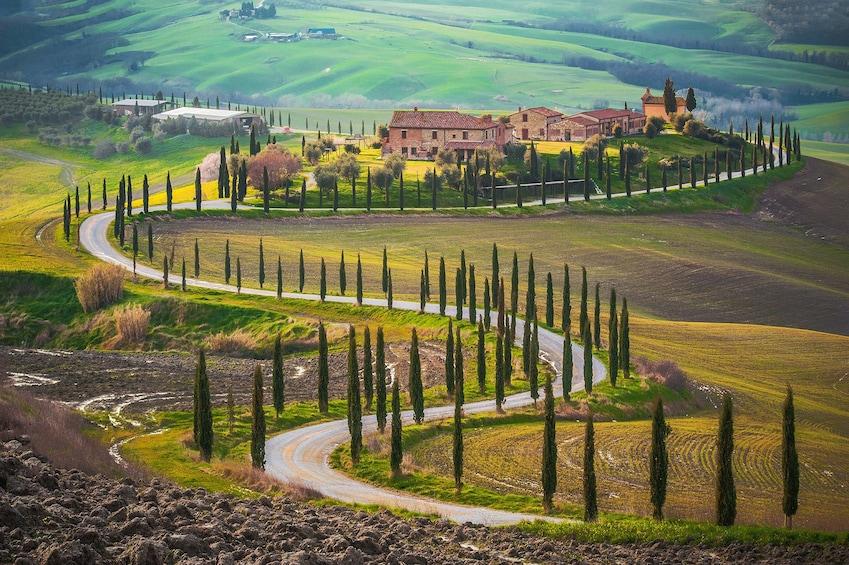 Show item 3 of 6. Wine and food tasting at Chianti Hills and Cortona