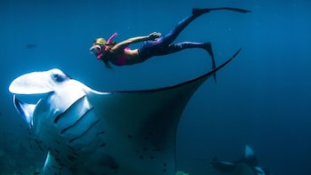 Swim with Manta Rays in Nusa Lembongan – From Bali