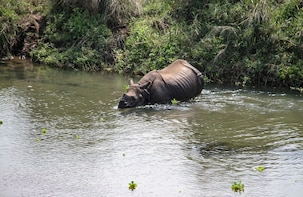 3 Day Chitwan Wildlife Safari Tour from Pokhara