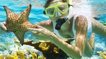Bali Lovina and Menjangan Snorkeling Tour