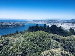 Dunedin City Highlights & Otago Peninsula Scenery Tour
