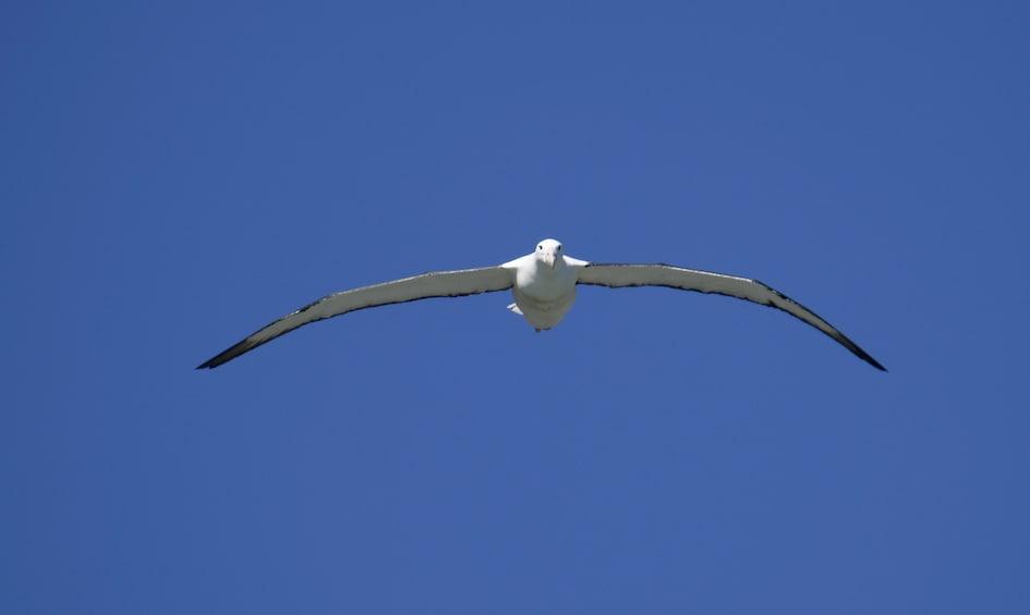 Show item 1 of 10. Dunedin City, Otago Peninsula & Albatross Guided Tour