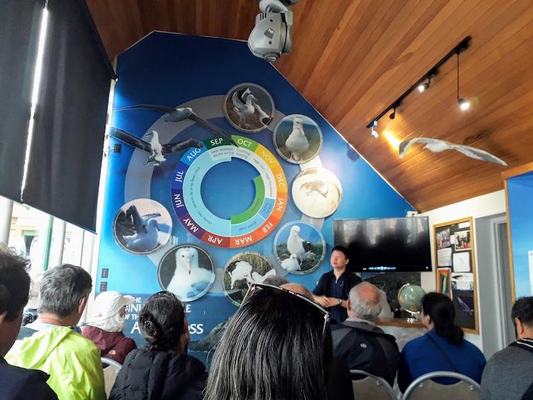 Show item 4 of 10. Dunedin City, Otago Peninsula & Albatross Guided Tour