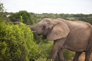 5-Day Garden Route & Addo Small Group tour from Cape Town